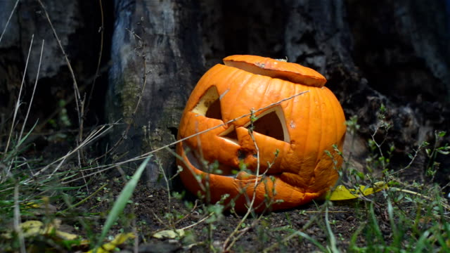 Closeup of a creepy rotten pumpkin with a lid near an old wooden stump is lit by a bright light. close-up of a jack-o-lantern prepared for Halloween. A waste of food concept video
