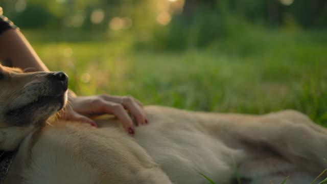 primo-up di un volto di cane, accarezzata da una mano di una ragazza - due oggetti video stock e b–roll