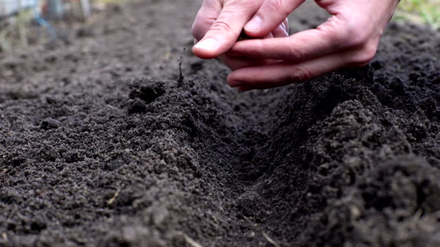 Close-up of a farmer sowing seeds Close-up of a farmer sowing seeds sowing stock videos & royalty-free footage
