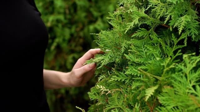 Close-up of a girls hand on a beautiful bush fir. video
