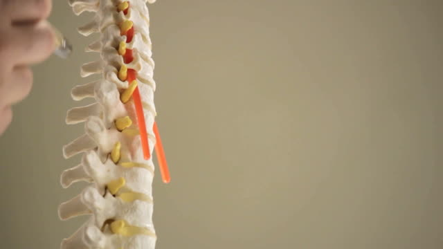 Close-up of a model of the spine video