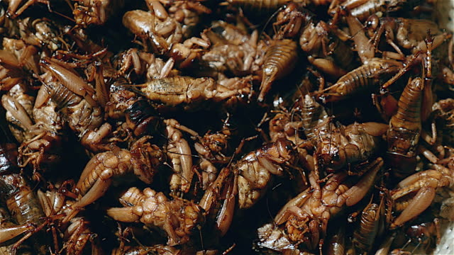 Close-up of a pile of deep fried grasshoppers video