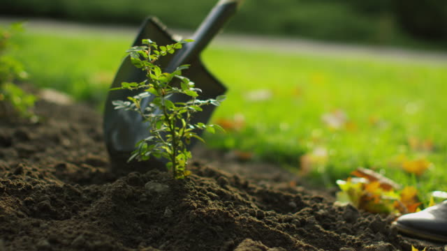 close-up of a shovel tending plant in the garden. - orticoltura video stock e b–roll