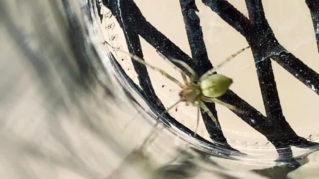 närbild av en gul sac spider krypa runt botten av en glasburk - spindel arachnid bildbanksvideor och videomaterial från bakom kulisserna