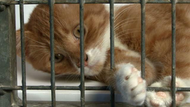 close-up of a young cat in cage - kafes sınırlı alan stok videoları ve detay görüntü çekimi