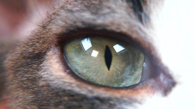 close-up of an animal eye. - felino video stock e b–roll