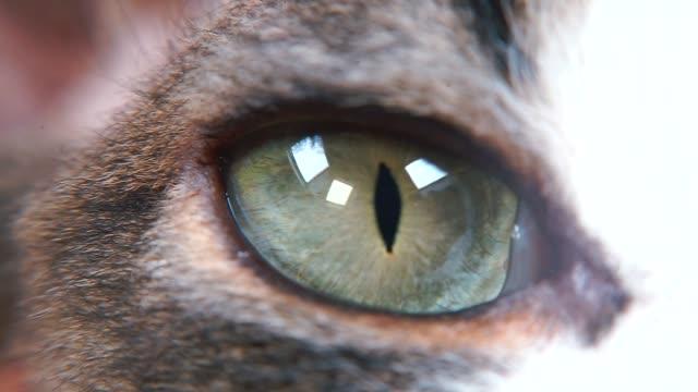動物の目のクローズアップ。 - ネコ科点の映像素材/bロール