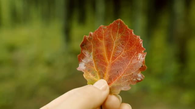 Closeup of autumn red leaf in female hand.