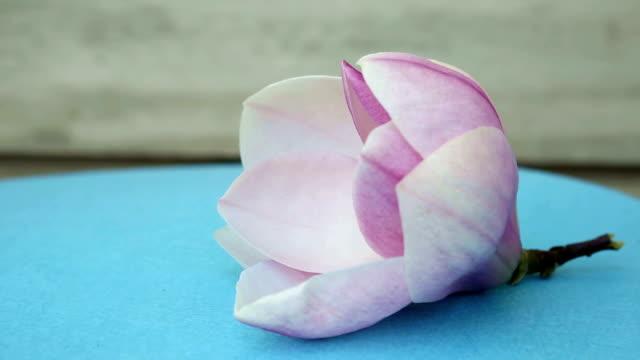 closeup of beautiful magnolia on rotating plate video