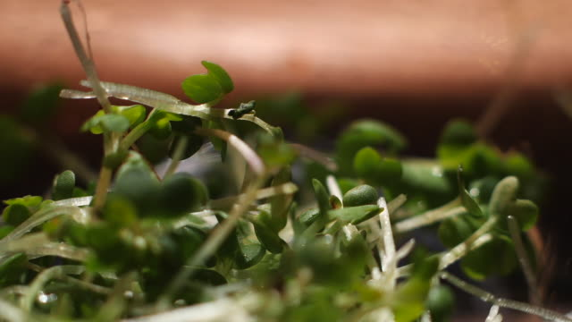 vídeos y material grabado en eventos de stock de primer plano de un montón de hierbas verdes frescas que caen sobre alguna superficie en la cocina. material de archivo. verdes para cocinar - pak choy