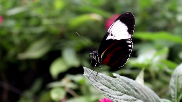 Closeup of butterfly on a leaf