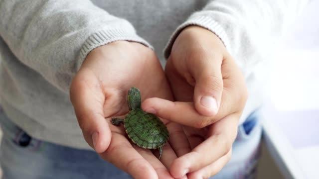 vidéos et rushes de gros plan de la main de l'enfant touchant la petite tortue domestique vert - tortue
