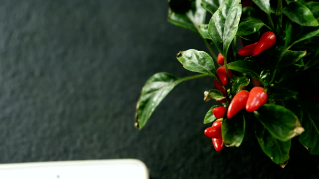 Close-up of chilli plant 4k video