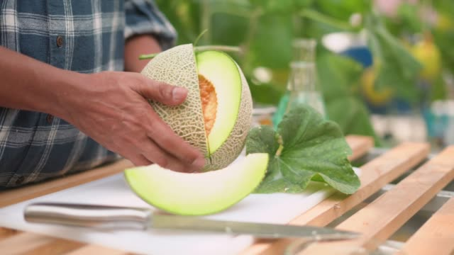 Close-up of famer's hand holding fresh cantaloupe on table