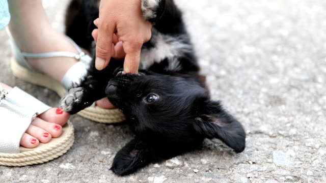 Close-up of female hand stroking cute black puppy - vídeo