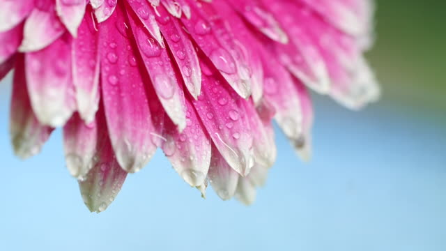 Close-up of flower with water drops