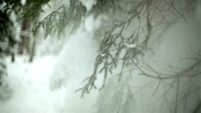 Close-up of frozen branch with panoramic background video