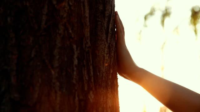 stockvideo's en b-roll-footage met close-up van de hand aanraken van een boom - schors