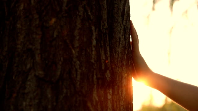 Closeup of hand touching a tree