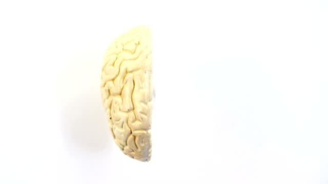vídeos de stock e filmes b-roll de close-up of human brain - cerebelo