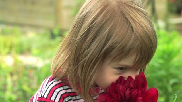 Close-up of little happy girl in summer park smells large bud of purple peony flower, looks at camera and smiles. Child plays with flower.
