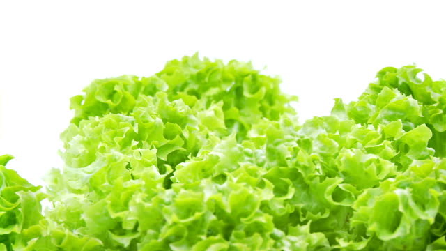 closeup of loose lollo bionda lettuce video