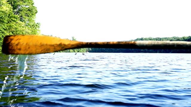 stockvideo's en b-roll-footage met close-up van oar peddel van roeiboot bewegen in water spatten op groen meer met rimpelingen en koppel ganzen zwemmen - paddle