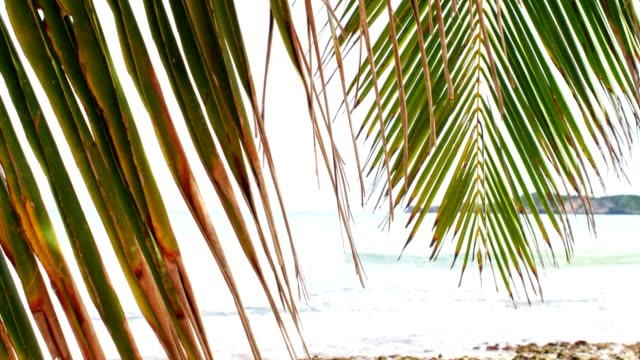 close-up of palm leaf against caribbean beach - albero tropicale video stock e b–roll