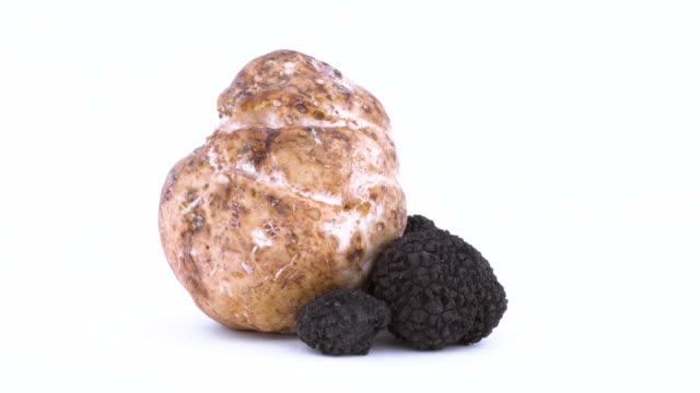 closeup of small black and one large white truffle. slowly rotating on the on the turntable. isolated on the white background. - alta moda italy video stock e b–roll