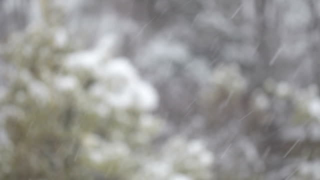 Closeup of Snow with Trees in Background video