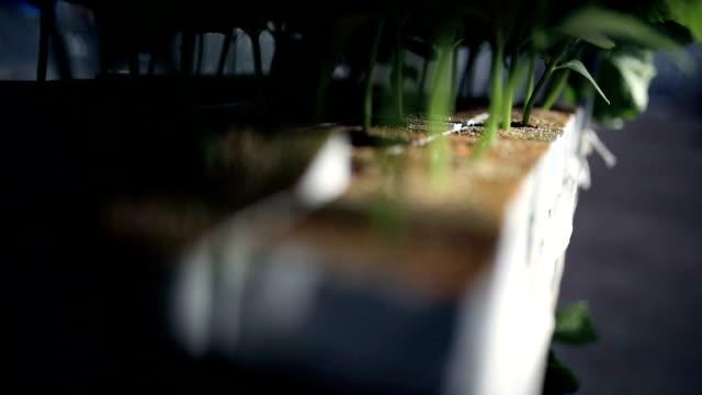 close-up di gambi di piante. arrivando a fuoco - stelo video stock e b–roll