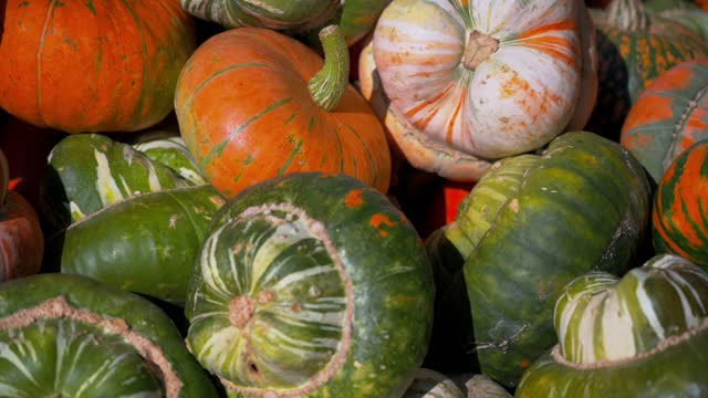 A closeup of the colorful and uniquely shaped pumpkins in 4K
