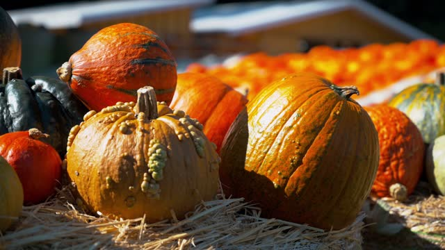 A closeup of the colorful and uniquely shaped pumpkins on the grass hay in 4K