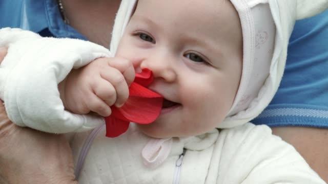 Close-up of the face of a child girl in her dad's arms smiles, laughs and smells a red flower Close-up of the face of a child girl in her dad's arms smiles, laughs and smells a red flower first occurrence stock videos & royalty-free footage