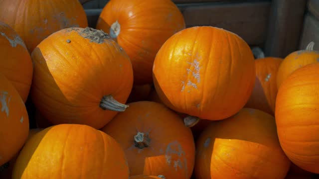 A closeup of the orange ripe and fresh pumpkins on each other in 4K