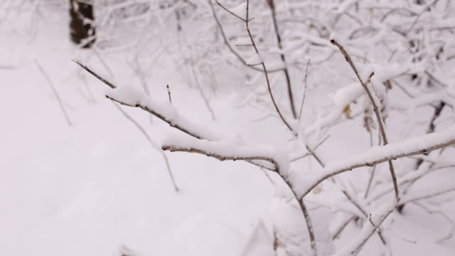 Close-up of tree branch covered with snow. video