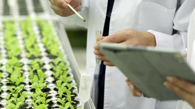 Close-up of two unrecognizable scientists, man and woman in white lab coats, taking soil samples from pots with growing leaf vegetables, placing soil into test tube and analyzing using tablet computer