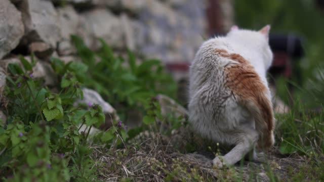 närbild av vit tamkatt smyger ut i trädgården njuter våren. - på tå bildbanksvideor och videomaterial från bakom kulisserna