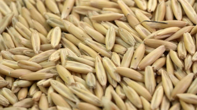 Closeup Of Whole Organic Oat Groats Stock Video - Download Video