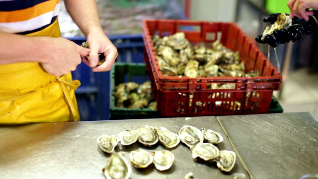 Close-up of worker opening oysters video