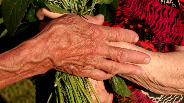close-up of wrinkled hands of elderly with flowers - family trees stock videos and b-roll footage