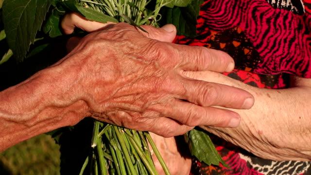 vídeos y material grabado en eventos de stock de primer plano de las manos arrugadas de ancianos con flores - árboles genealógicos