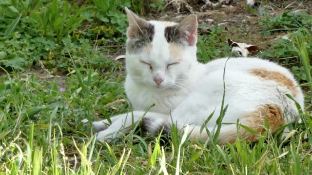 Closeup on white and orange cat  in a garden