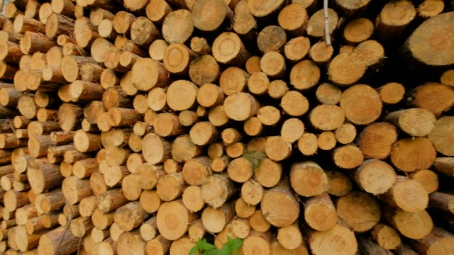 closeup pan shot of huge woodpile in forest - albero caduto video stock e b–roll