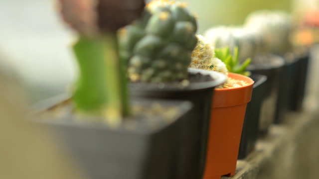close-up panning : cactus is ordered on the edge video