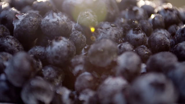 closeup panning shot of farm fresh blueberries ready to serve video