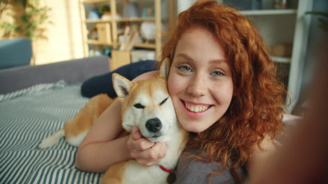 close-up portrait of girl and dog lying on couch kissing looking at camera - selfie stock videos & royalty-free footage