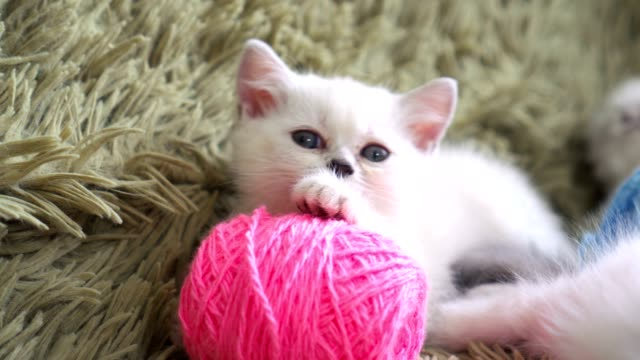 Close-up portrait of kitten with balls of threads video