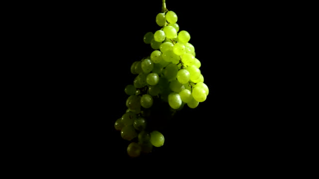 close-up rotation green grapes on black background. - vite flora video stock e b–roll