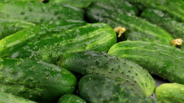 Close-up. Rotation of natural ripe green cucumbers in drops of dew. Close-up. Rotation of natural ripe green cucumbers in drops of dew. Food background pickle stock videos & royalty-free footage
